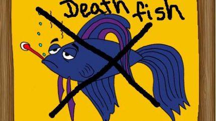 Archie death fish JPG